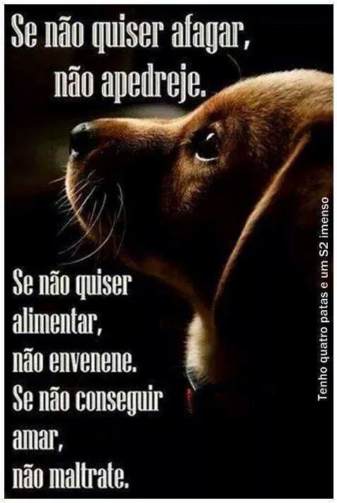 Entendo que muitas pessoas não gostem de cães e/ou gatos. Gostar ou não de animais de estimação é direito inalienável de cada um. O que eu não entendo é o prazer em maltratar. Vira e mexe surgem im...