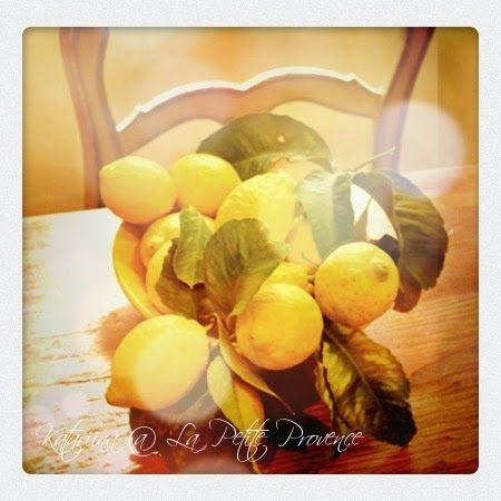 Sitruunan sadonkorjuun aikaan. Lemons from Menton.
