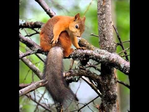 Az erdő növény és állatvilága Emlősök