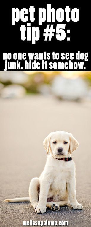 tip #5 for taking better photos of your pets. :)