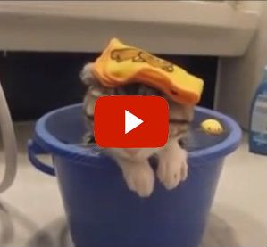 Funny Cats in Water!