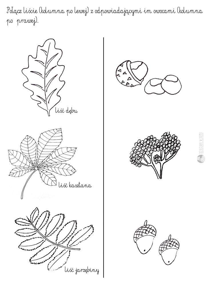 Liscie Drzew Szablony I Karty Pracy Szablony Edukacja I Kartki