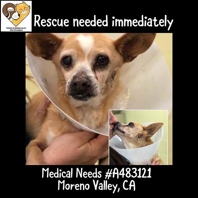 Emergency Update Needs Immediate Rescue Due To Medical Needs