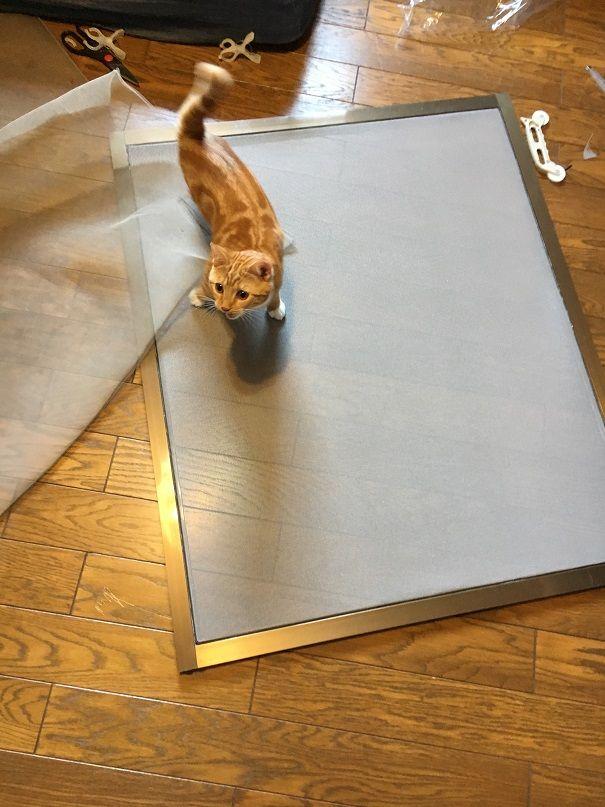 猫を室内で飼うための対策 網戸をペットディフェンスに取り換える キングギドラの日常 猫小屋 猫 インテリア 猫