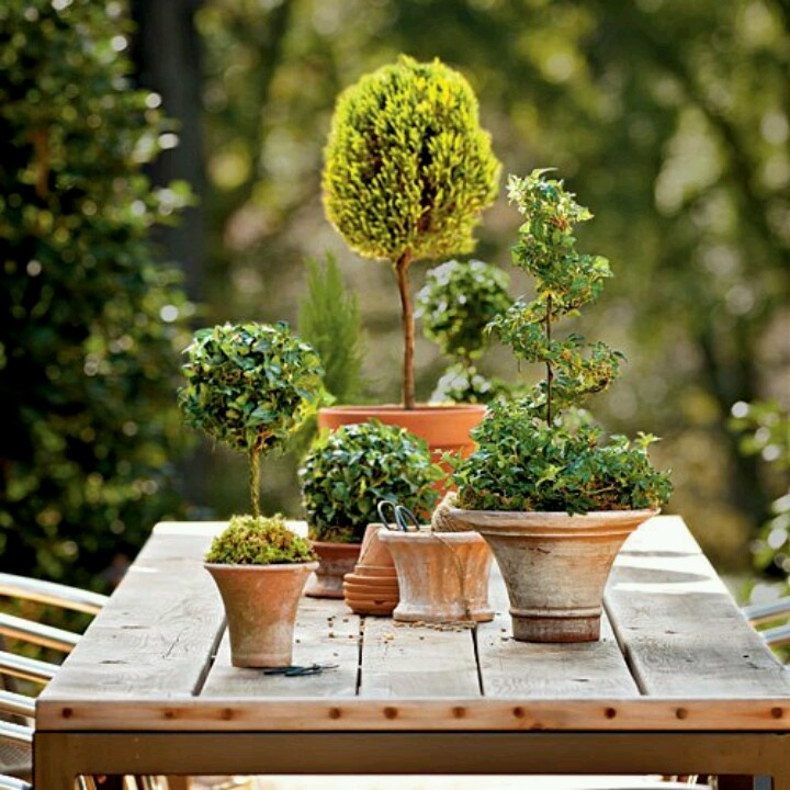 Amazing Topiary: 17 Best Images About Party/Fundraiser Decorating Ideas On