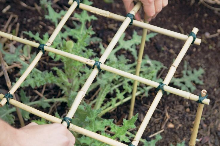 Find out how to use old bamboo stems to make plant supports for flopping plants, in this simple step by step guide, from BBC Gardeners' World Magazine.