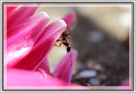 Albums archivés - Insectes !