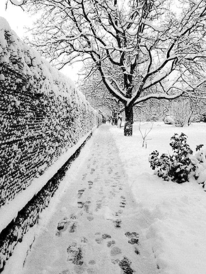 snowy winter street