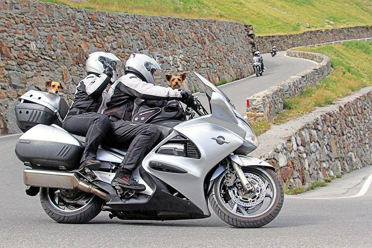 #Motorradfahren mit #Hund - #Kradblatt 12/17