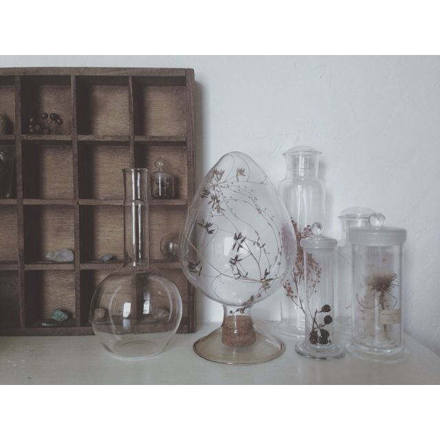 yanakaさんの、植物,アンティーク,古道具 什器,古道具,雑貨,標本,ガラス,玄関/入り口,のお部屋写真