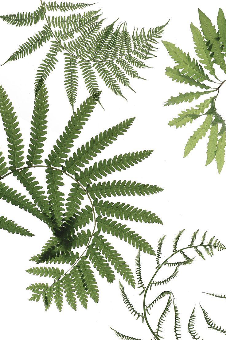 649 best beautiful leaf images on Pinterest | Color sheets, Green ...
