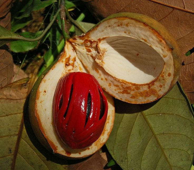 Nutmeg trees produce two spices, nutmeg and mace, both made from the seeds.