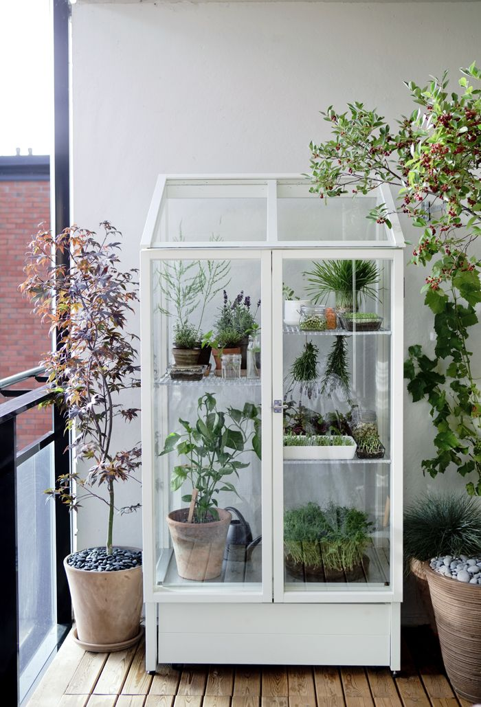 use a china cabinet for plants as mini indoor greenhouse