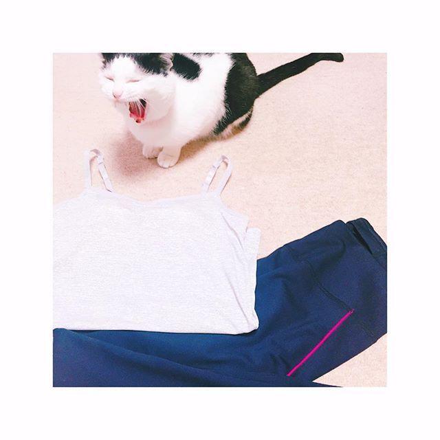 きょーはホットヨガ、2レッスン!ウェア1セットしか持ってなかったから、急遽ユニクロで購入。ピンクのラインが可愛い♡それにしても、汗かいたかいた…美脚ヨガたのしかったな…♡ #ホットヨガ#lava#ヨガウェア#ユニクロ#UNIQLO#美脚ヨガ#パワーヨガ#愛猫#まろちゃん#大きなあくび