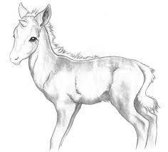 11 best Horse images on Pinterest Horse illustration Adult