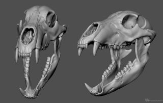 Bear Skull 3D model for sale | none human | Bear skull
