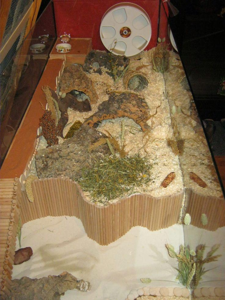 * * * Bimas Hamsterwelt * * * : Was benötigt ein Hamster?
