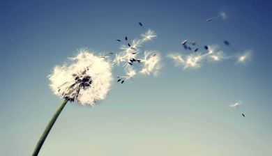 Engelenbericht Juni - FemNa40