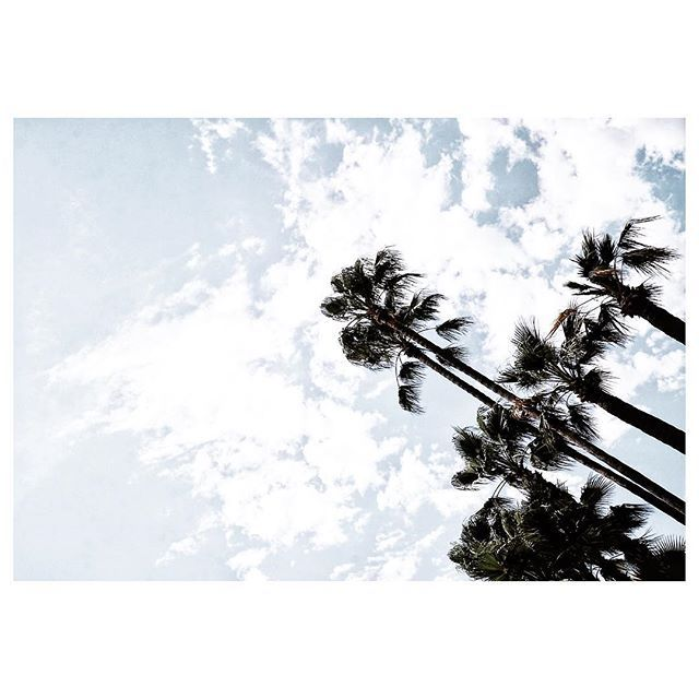 ...D A Y  4... #foreversummerweek When you see palm trees, you know it's summer and you're on holidays 😎🌴🍹 (you of course might live in California or Spain...in that case-I'm jealous!) #postcard #palmtreelove #lookup  #mercarrietravels ______________________________________________________ #cannes #cotedazur #france #travelstory #palms #palmtreeporn #palmtree #landscapehunter #landscapecaptures #minimalpeople #cloudscape #skyscape #beachlife #letsgosomewhere #nothingisordinary…
