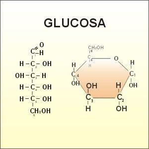 Actúan Sobre El Metabolismo Celular Su principal función es su participación en el metabolismo de los hidratos de carbono y de las proteínas. Es cofactor de tres enzimas muy importantes del metabol…