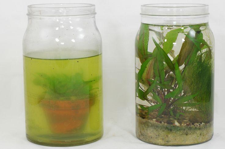 wasserpflanzen im glas pflanze pinterest pflanzen wasser und glas. Black Bedroom Furniture Sets. Home Design Ideas
