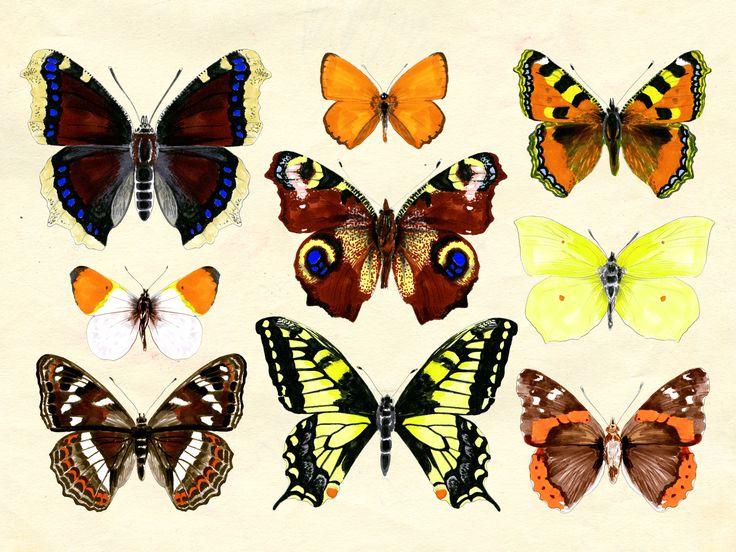 Kauniit ja kevyet perhoset: Tulosta Yhteishyvän perhoskalenteri