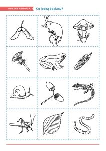 Dzień Bociana – pakiet edukacyjny (Co jedzą bociany? Wybierz odpowiednie ilustracje, wytnij i pokoloruj a następnie naklej na papierowy talerzyk. Obiad dla bociana gotowy.)
