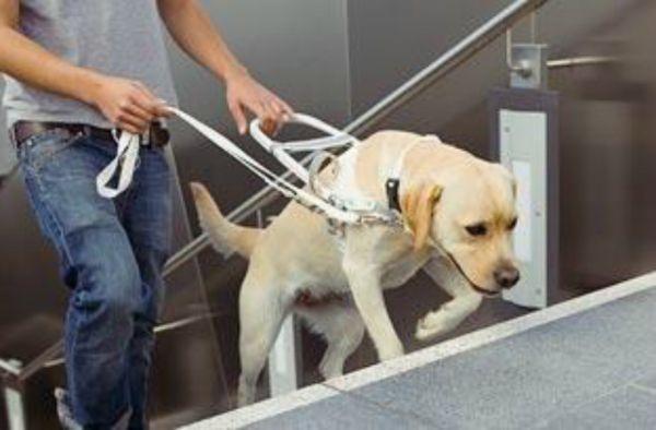 Statement Bag - LILO (The rescued pup) by VIDA VIDA prizRiKl6a