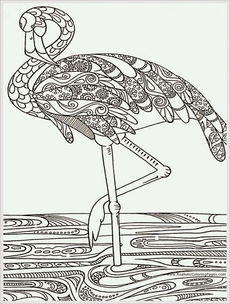 Heron Bird Adult Coloring Pages