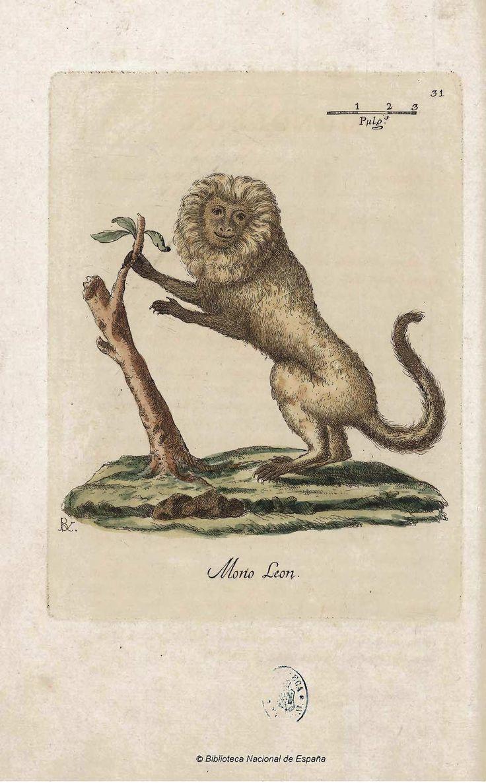 Mono león - Coleccion de laminas que representan los animales y monstruos del Real Gabinete de Historia Natural de Madrid, con una descripcion individual de cada uno. Bru de Ramón, Juan Bautista — Libro — 1784-1786