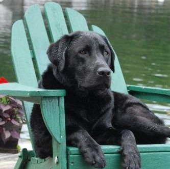 Would love to get a photo with my 2 black labs in red chairs next to each other like this.