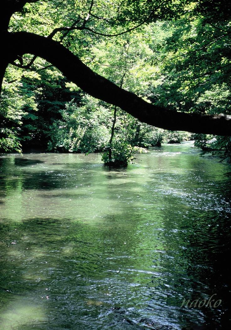 green.. Oirase,Aomori: Favorite Places, Japan Inspiration, Beaten Paths, Beautiful Japan, Aomori Pin, Japan Weeks, Japanese Inspiration, Beautiful Photography, Japan Japan