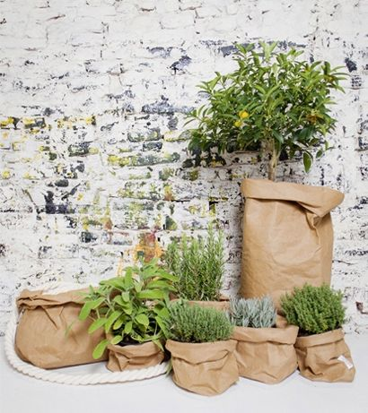 When looking at different indoor trees options, we found these bags that we liked, that could cover the pots, if they come in different shapes/ forms that do not go that well with the general atmosphere – We bought some to see how they look and they are quite nice actually; we like particularly the white and the avana ones - http://www.lesorelle.toscana.it/en/categories/uashmama