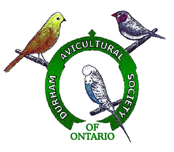 Durham Avicultural Society of Ontario #parrots #parrot #petbirds #companionparrot #birdclub