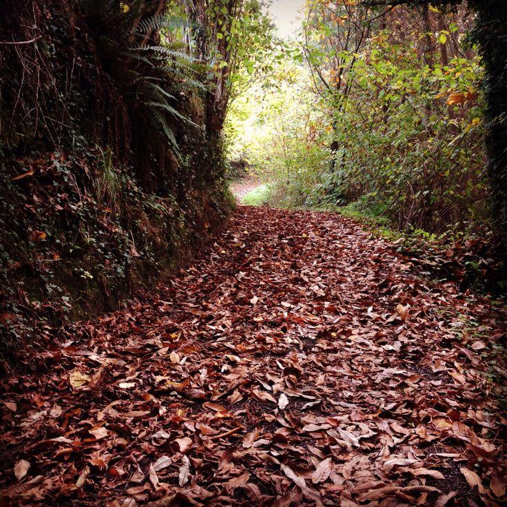 Sendero por el bosque de Yerbo. Tineo. Asturias. Spain. #CaLulon #asturias #casarural