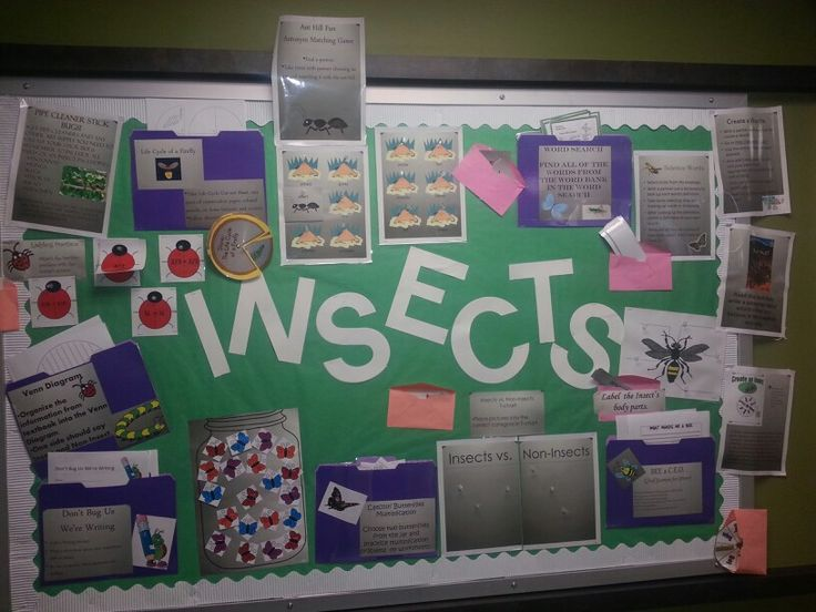 Interactive bulletin board. 15 activities in Insects. Including math, science,  reading, writing, art, classroom management, and graphic organizers.