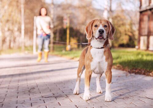 GLI SVANTAGGI DEL GUINZAGLIO AVVOLGIBILE - Portare a spasso il vostro cane è molto importante, ma lo è altrettanto scegliere il guinzaglio giusto. Ecco gli svantaggi del guinzaglio avvolgibile.