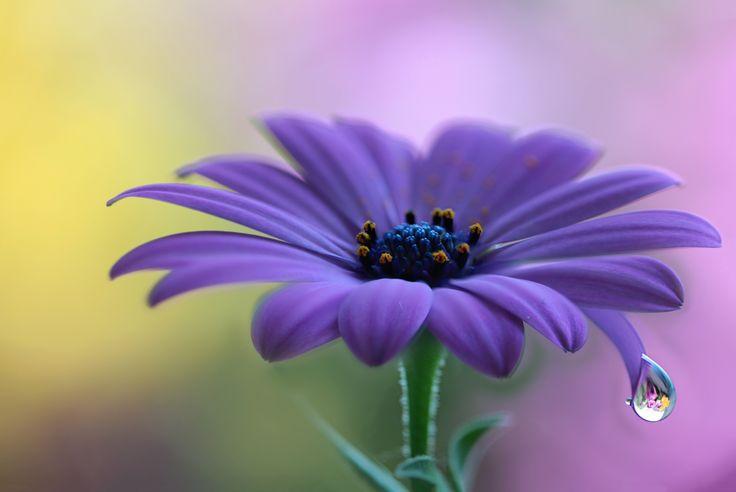 flower by Jarmila Vymazalová on 500px