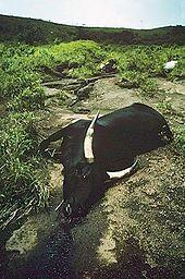 Lake Nyos disaster - Wikipedia
