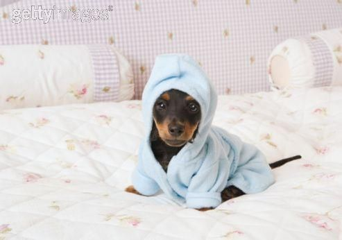 oh so very sweet :)Dogs, Favorite Pets, Dachshund, Spa Day, Adorable, Fashion Puppies, Funny Animal, Bath Beautiful, Bath Time