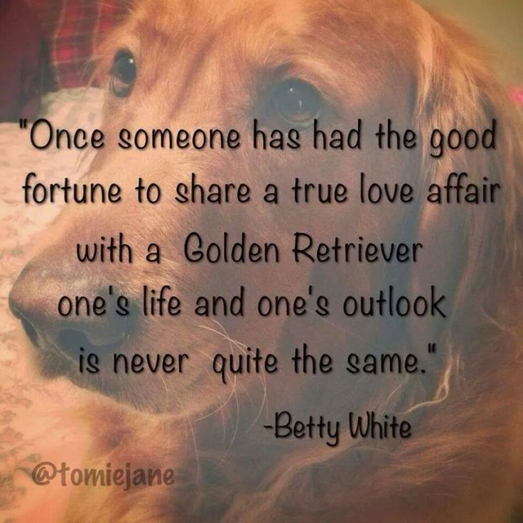 Golden Retriever and Betty White quote.