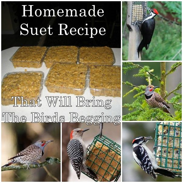 Homemade suet recipe that will bring the birds begging for How to make suet balls for bird feeders