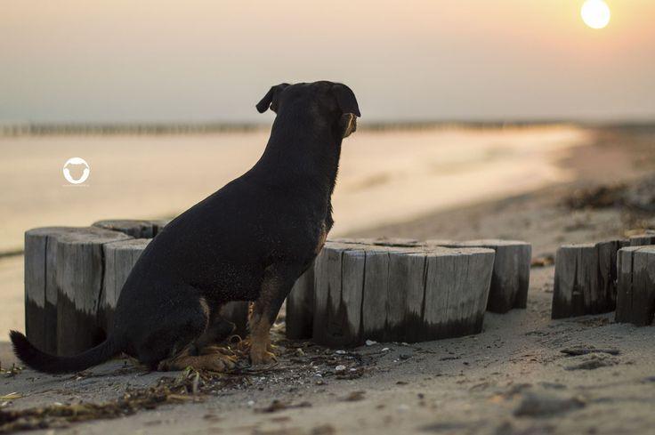 Sonnenaufgang am Strand von Zingst - Hundeurlaub an der Ostsee ⚓   ©Melody M. Bayer www.buddyandme.de   #PinscherBuddy