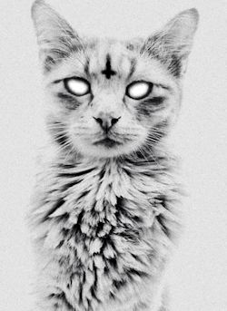 black and white trippy gif images | cat trippy cute adorable Black and White drugs lsd cats kitten shrooms ...