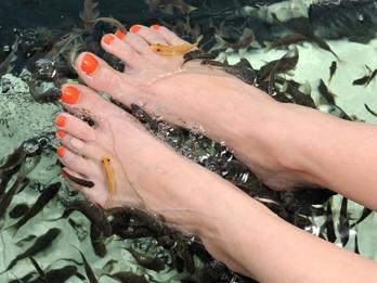 Piedi morbidi e lisci grazie a un pesciolino. È la tendenza dell'estate, per sfoggiare sandali e infradito senza ombra di screpolature