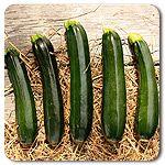 Organic Midnight Lightning Zucchini