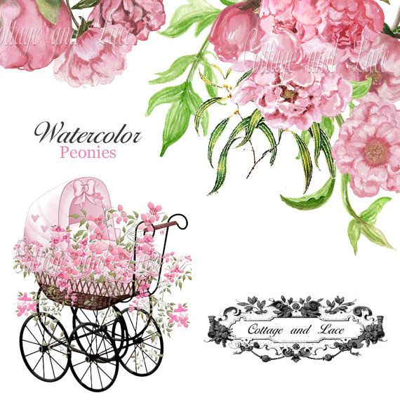Digital Floral Clip Art Hand Painted Peonies Baby Shower
