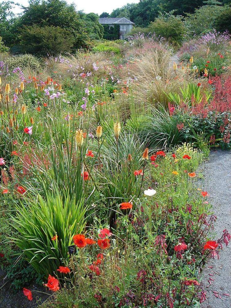 the South African Garden - thegardenhouse.org.uk