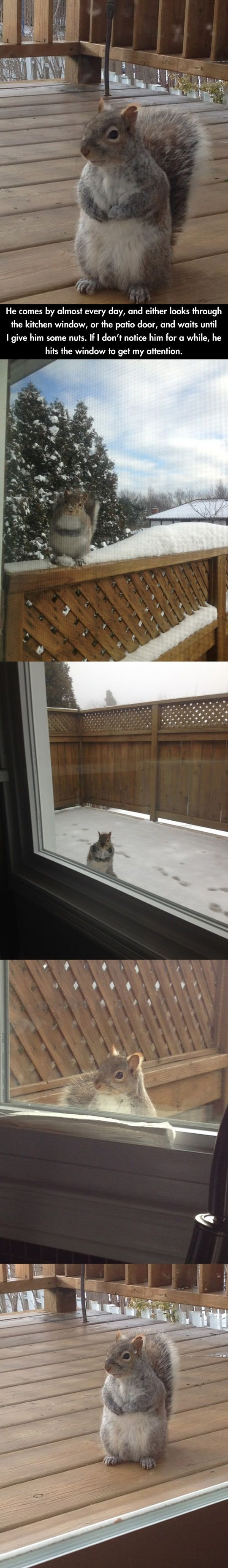 Squirrel who comes every day for nuts // funny pictures - funny photos - funny images - funny pics - funny quotes - #lol #humor #funnypictures