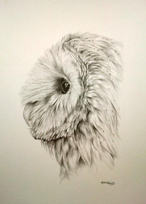 "Barn owl pencil drawing 12x9"" | I think I'll draw this ..."